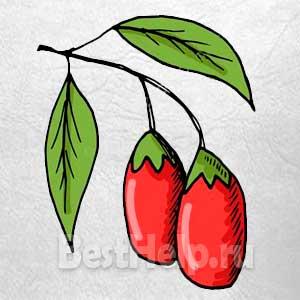 Годжи-ягоды долголетия